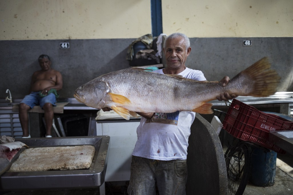 "In this Sept. 1, 2019 photo, a vendor poses holding an Amazon fish known as ""Pescada Branca"" at the Ver-o-Peso riverside market in Belém, Brazil. The ..."