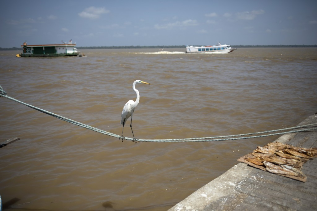 In this Sept. 1, 2019 photo, a heron balances on a rope that ties a fishing boat to the dock at the Ver-o-Peso riverside market in Belém, Brazil. Belé...