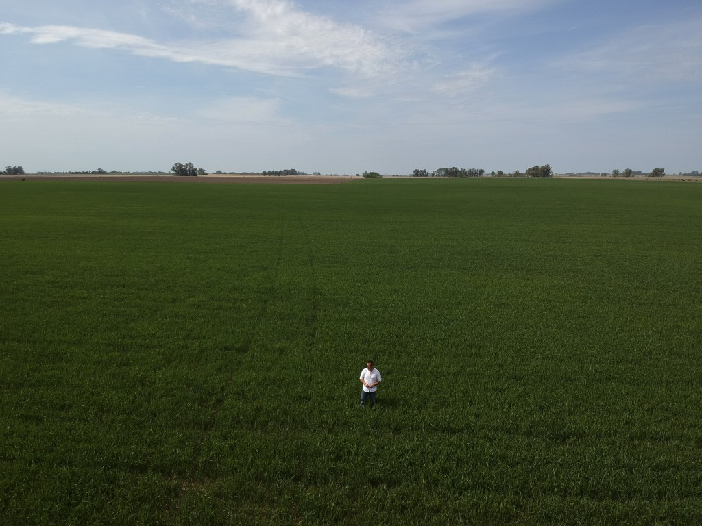 In this Oct. 9, 2019 photo, farmer Juan Rossi walks through his wheat fields on the outskirts of Pergamino, Argentina. Rossi was among a group of jubi...
