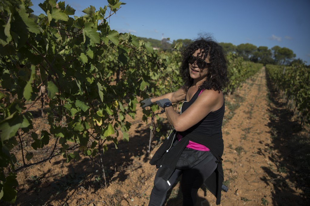 A worker tends to a vineyard after a recent harvest in the southern France region of Provence, Friday Oct. 11, 2019. European producers of agricultura...