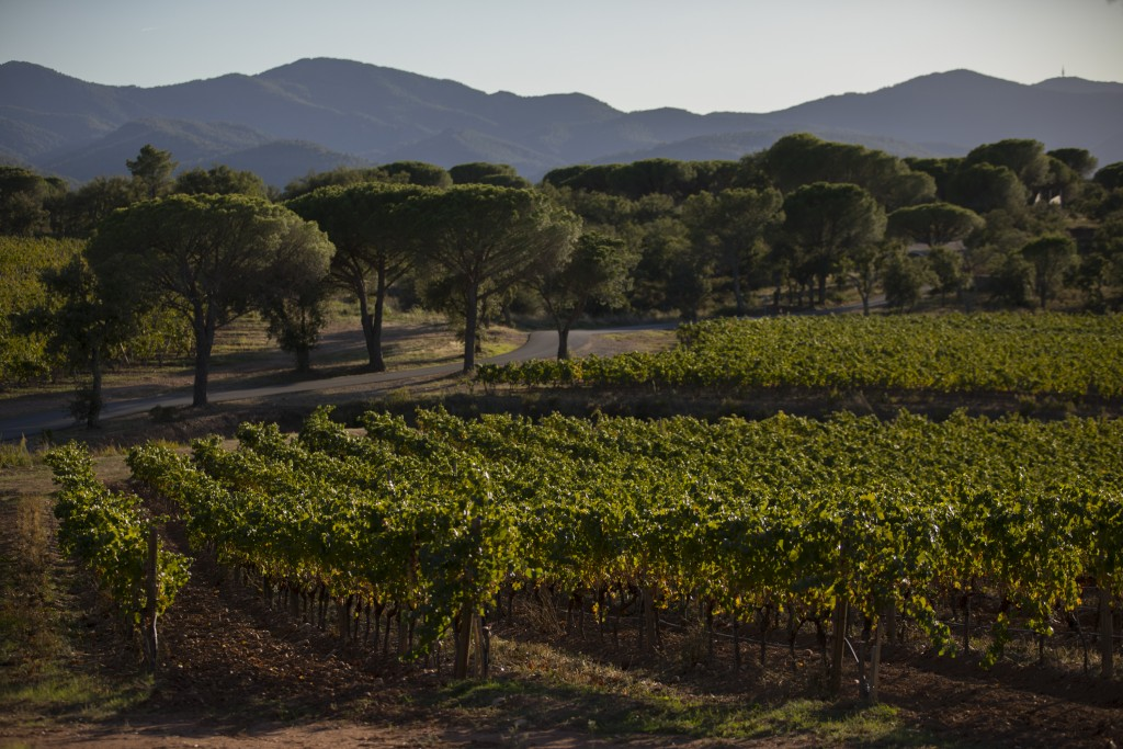 The Château des Bertrands vineyard is pictured after a recent harvest in Le Cannet-des-Maures, in the Provence region, Thursday Oct. 10, 2019. Europe...