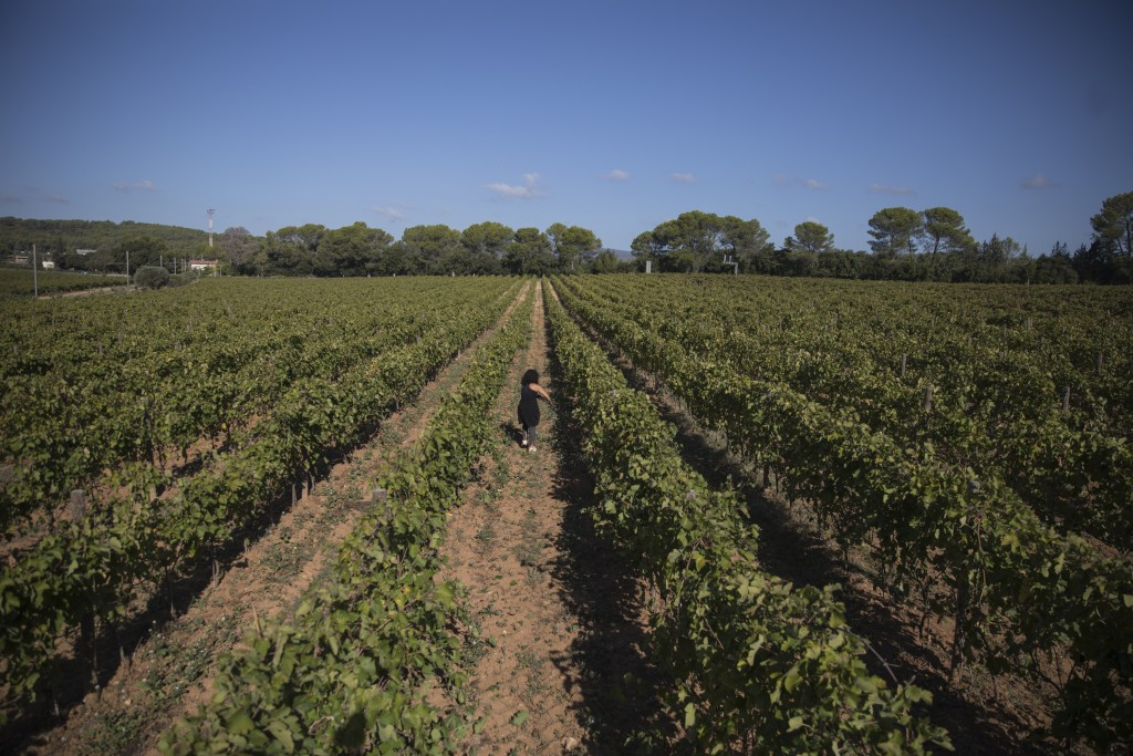 A worker tends to a vineyard in the southern France region of Provence, Friday Oct. 11, 2019. European producers of premium specialty agricultural pro...