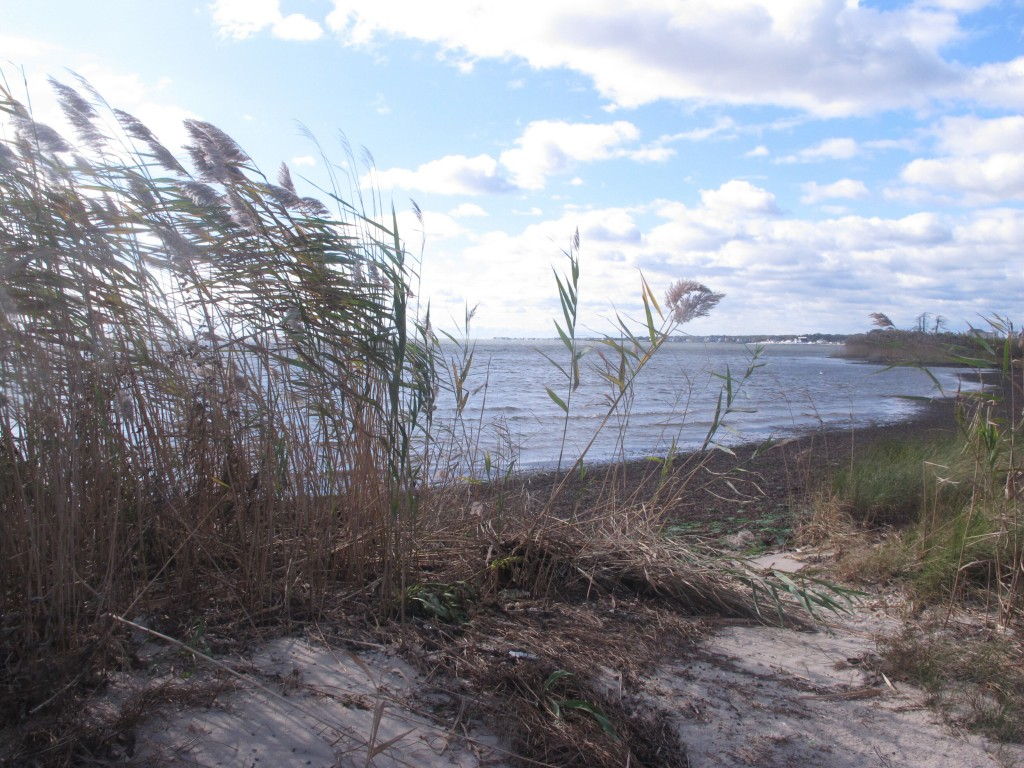 This Oct. 17, 2019 photo shows the shoreline of Barnegat Bay in Waretown, N.J., near where the former Oyster Creek nuclear power plant used to operate...