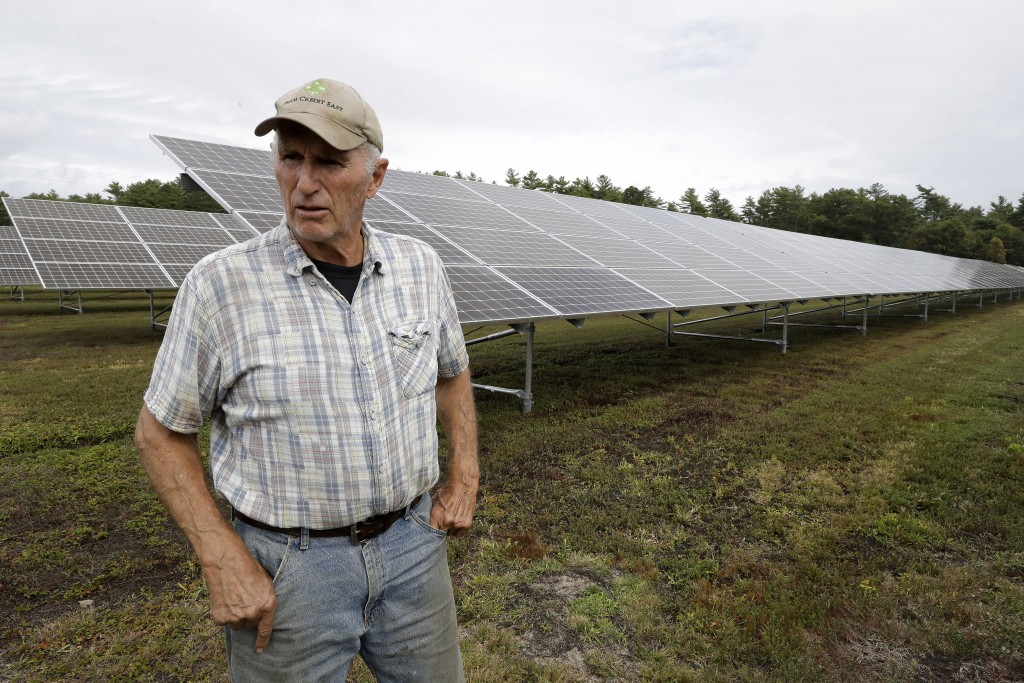 In this Wednesday, Oct. 2, 2019, photo, cranberry grower Dick Ward, of Carver, Mass., stands near a solar array in a cranberry bog on his farm, in Car...