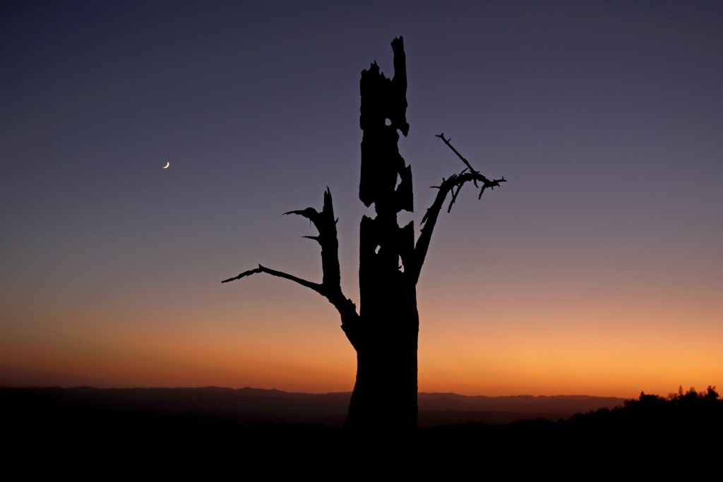 A charred tree stands above a smoky valley in the aftermath of the Kincade Fire near Healdsburg, Calif., Wednesday, Oct. 30, 2019. (AP Photo/Charlie R...