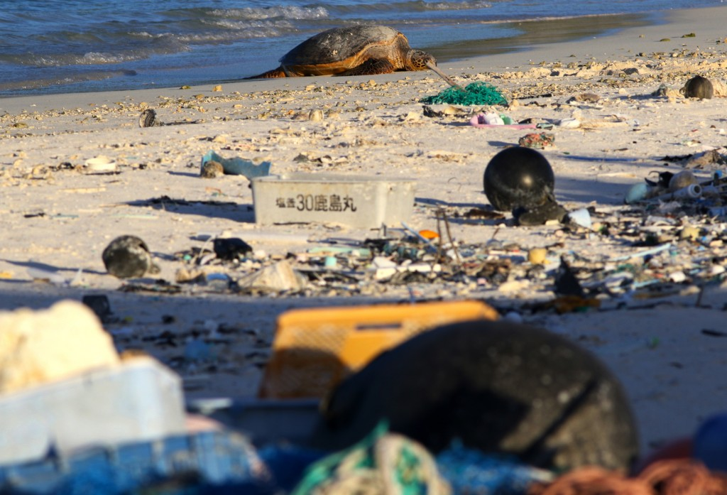 In this Oct. 15, 2019, photo, a green sea turtle rests on the beach among marine debris on Midway Atoll in the Northwestern Hawaiian Islands. In one o...