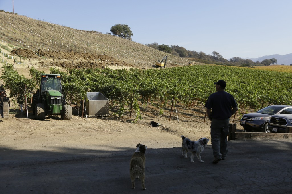 In this Wednesday, Nov. 6, 2019 photo, partner Bret Munselle of Munselle Vineyards stands with his dogs and looks out at the hillside where he lost ab...