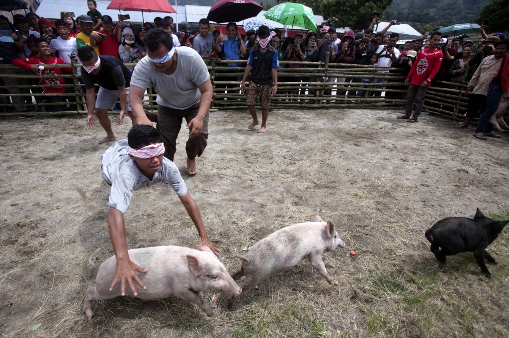 In this Saturday, Oct. 26, 2019 photo, blindfolded men participate in a pig wrangling competition during Toba Pig and Pork Festival, in Muara, North S...