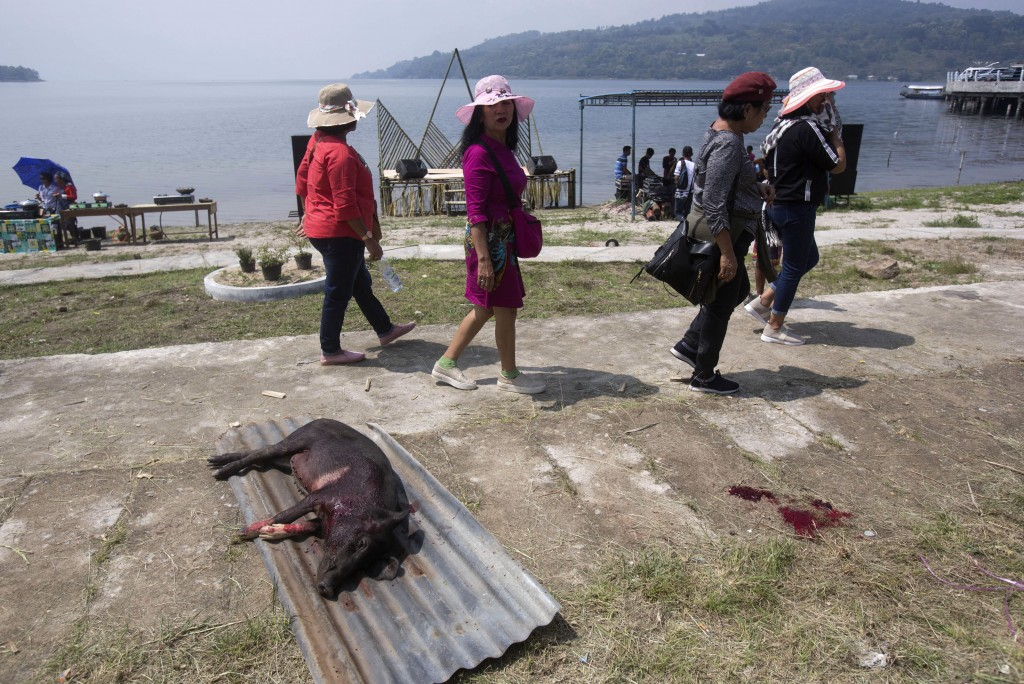In this Friday, Oct. 25, 2019, photo, visitors walk past a slaughtered pig during Toba Pig and Pork Festival, in Muara, North Sumatra, Indonesia. Chri...