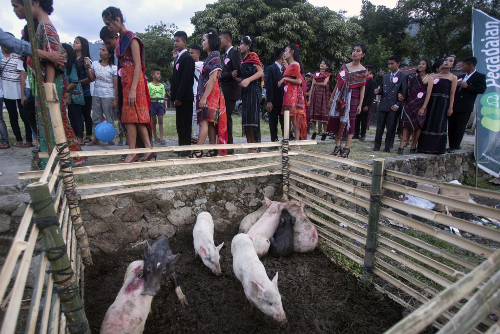 In this Friday, Oct. 25, 2019, photo, participants prepare to perform during a fashion show held as a part of Toba Pig and Pork Festival, in Muara, No...