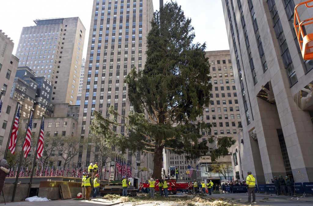 The 2019 Rockefeller Center Christmas tree, a 77-foot tall, 12-ton Norway Spruce, is moved to a platform where it will be secured at Rockefeller Cente...