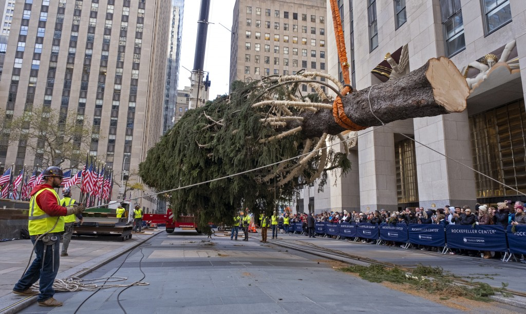The 2019 Rockefeller Center Christmas tree, a 77-foot tall, 12-ton Norway Spruce, is lifted and prepared for setting on a platform at Rockefeller Cent...