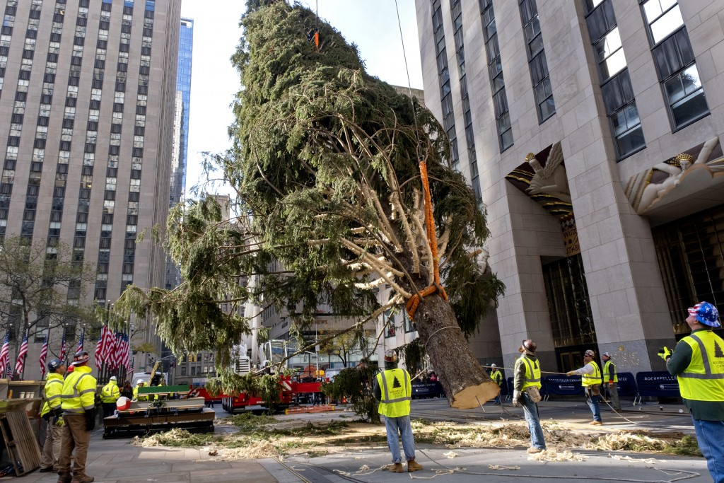 The 2019 Rockefeller Center Christmas tree, a 77-foot tall, 12-ton Norway Spruce, lifted and prepared before being set on a platform at Rockefeller Ce...