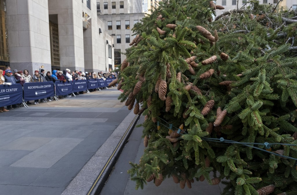 Spectators look on as the 2019 Rockefeller Center Christmas tree, a 77-foot tall, 12-ton Norway Spruce, lays on its side after arriving at Rockefeller...