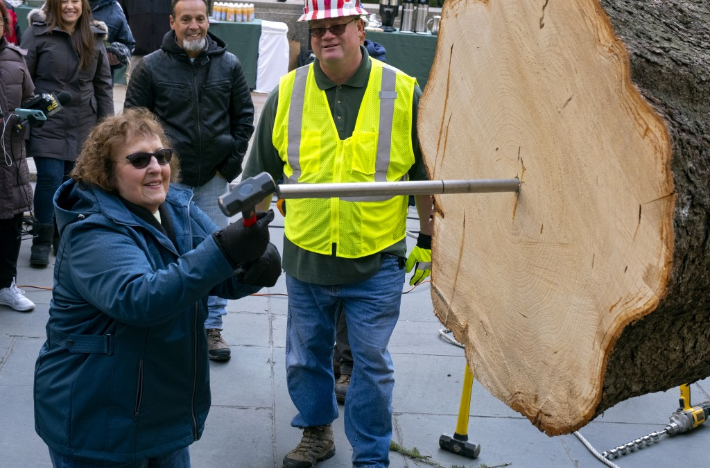 Carol Schultz, who donated the 77-foot tall, 12-ton Norway Spruce for the 2019 Rockefeller Christmas Tree, pounds a spike in the base of the tree Satu...