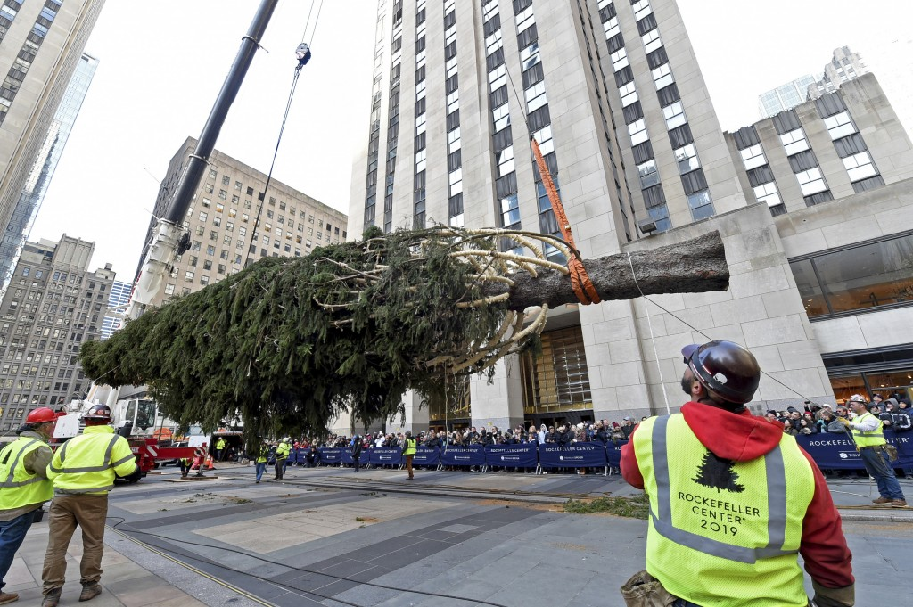 IMAGE DISTRIBUTED FOR TISHMAN SPEYER - Workers prepare to raise the 2019 Rockefeller Center Christmas tree, a 77-foot tall, 12-ton Norway Spruce from ...