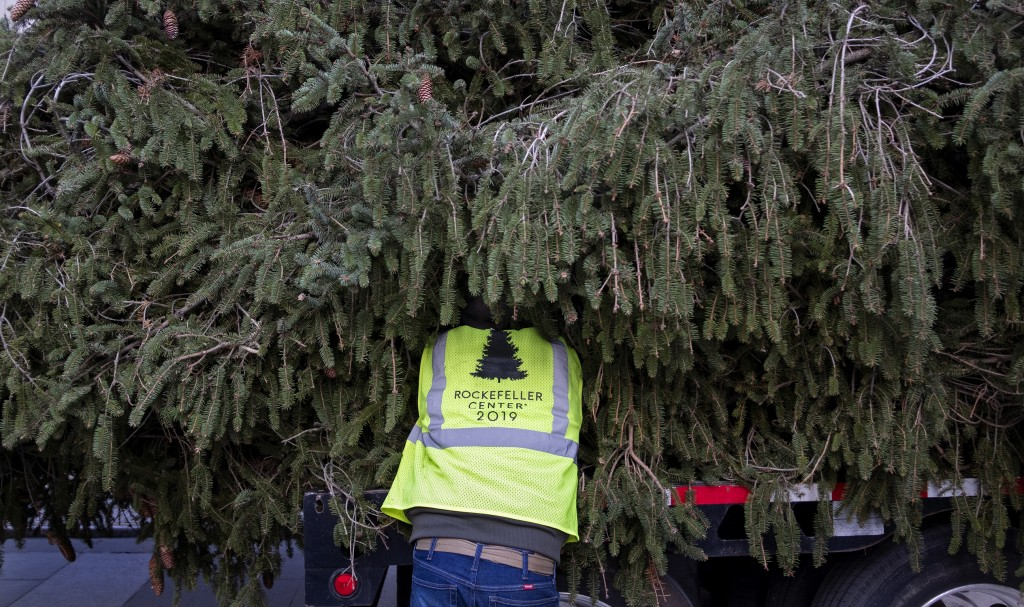A worker helps prepare the 2019 Rockefeller Center Christmas tree, a 77-foot tall, 12-ton Norway Spruce, for lifting upright to a platform at Rockefel...