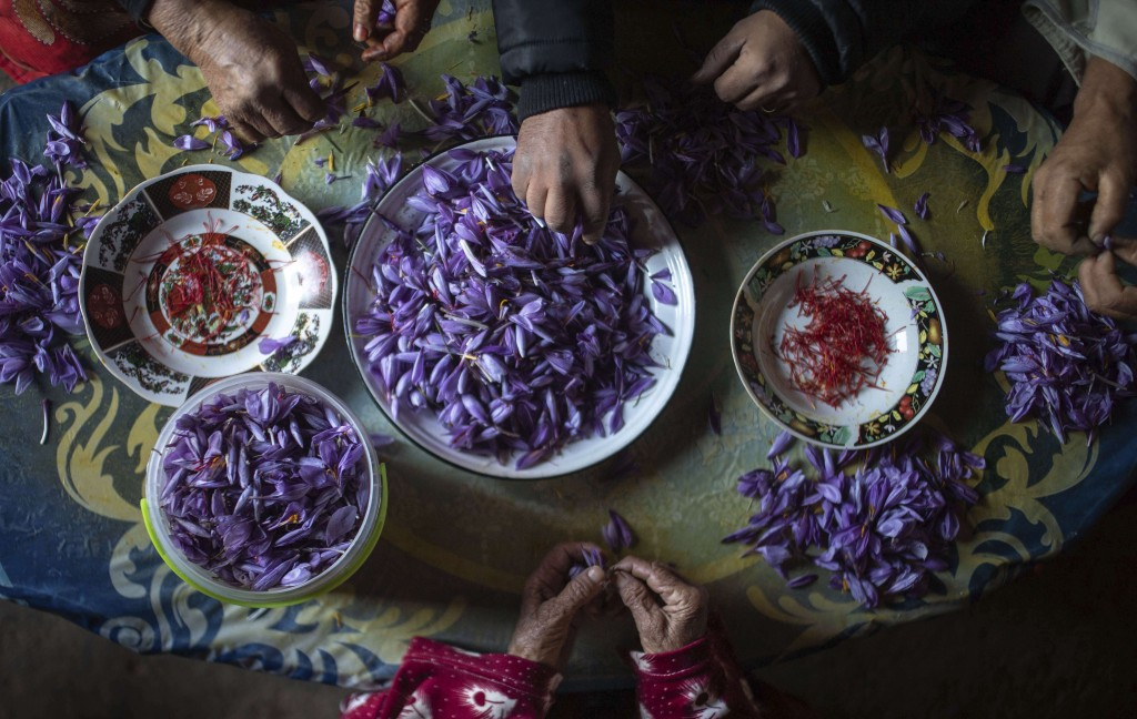 In this Tuesday, Nov. 5, 2019 photo, a family separates Saffron stigma from petals shortly after harvesting during harvest season in Askaoun, a small ...