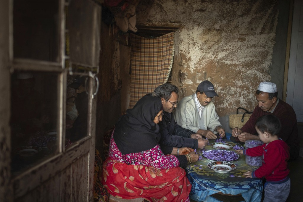 In this Tuesday, Nov. 5, 2019 photo, a family picks Saffron stigma shortly after harvesting during harvest season in Askaoun, a small village near Tal...