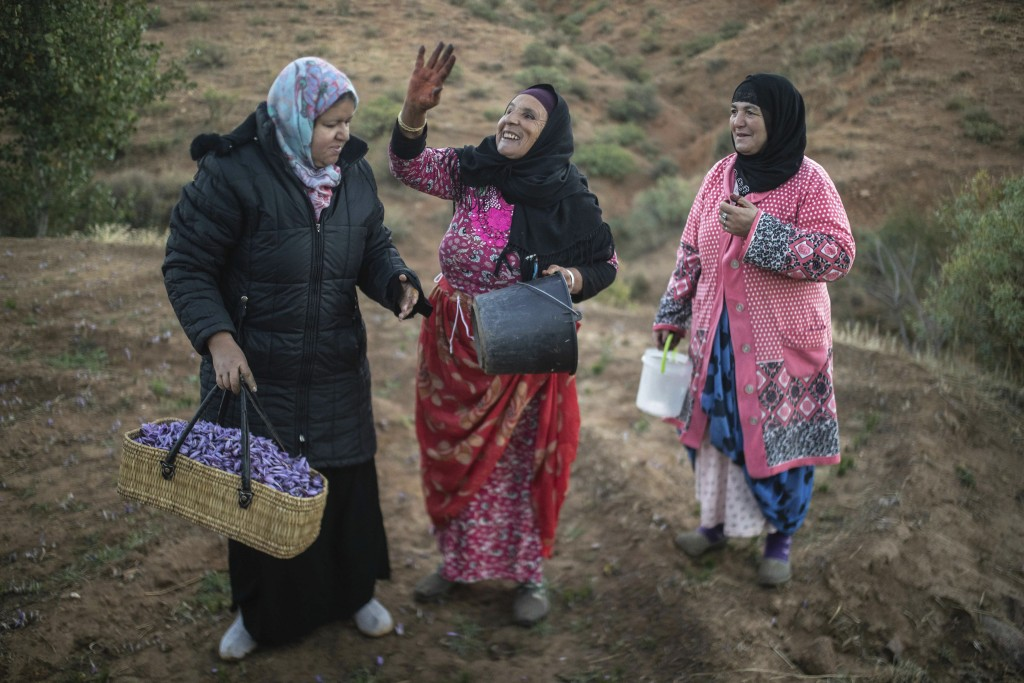 In this Tuesday, Nov. 5, 2019 photo, villagers rest for a moment as they collect Saffron flowers at dawn during harvest season in Askaoun, a small vil...