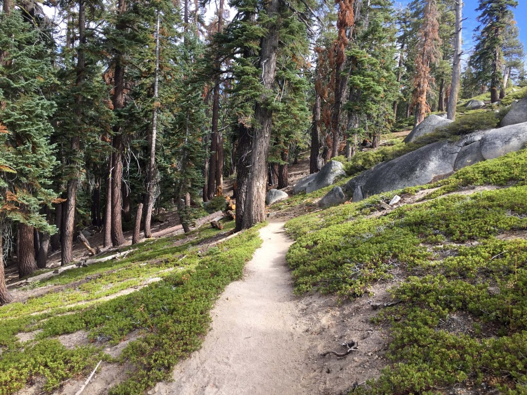 This Sept. 29, 2018 photo shows an off-the-beaten path trail in Yosemite National Park leading to North Dome, which provides jaw-dropping views of the...