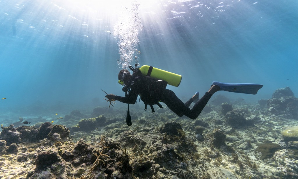 Diver Everton Simpson carries pieces of staghorn coral from a nursery to be planted inside the White River Fish Sanctuary Monday, Feb. 11, 2019, in Oc...