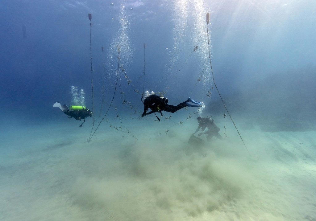 Divers, from left, Ray Taylor, Everton Simpson and Andrew Todd gather coral from a coral nursery to be planted inside the White River Fish Sanctuary T...