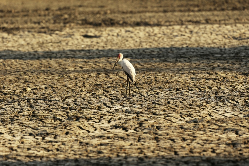 FILE - In this Oct, 27, 2019 file photo, a bird stands on a sun-baked pool that used to be a perennial water supply in Mana Pools National Park, Zimba...