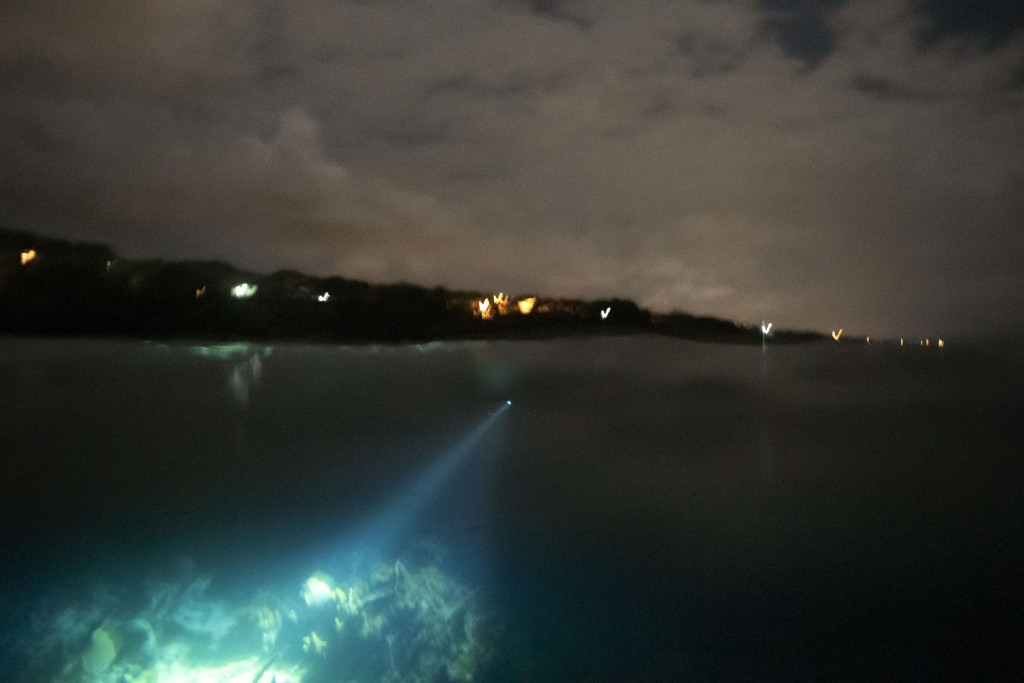 Nicholas Bingham uses an underwater flashlight to spearfish at night, which is banned, under a moonlit sky, in Stewart Town, Jamaica, Friday, Feb. 15,...