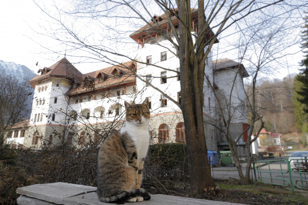 In this photo taken on Monday, Dec. 16, 2019, Ileana the cat sits backdropped by the building of a communist era orphanage that was a home for, Florin...