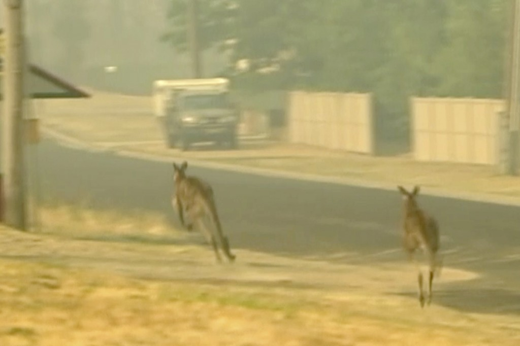 In this image made from video taken Dec. 21, 2019, kangaroos move as nearby property burn in a fire in Lithgow, New South Wales state, Australia. Aust...