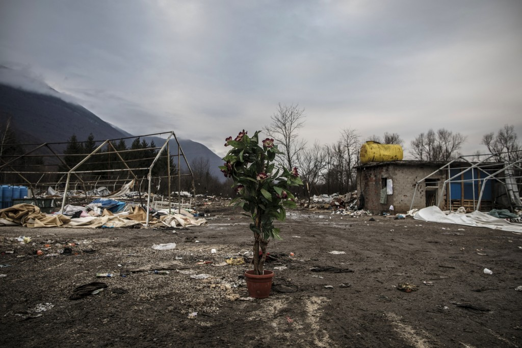 In this picture taken Wednesday Dec. 11, 2019, a plant sits in the middle of a makeshift refugee camp cleared and destroyed earlier by Bosnian police ...