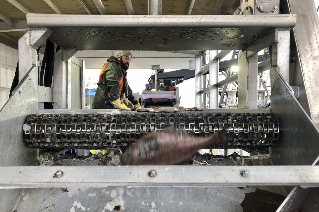 In this Dec. 11, 2019 photo, a worker sorts fish being unloaded from a bottom trawler containing rockfish and other groundfish species in Warrenton, O...
