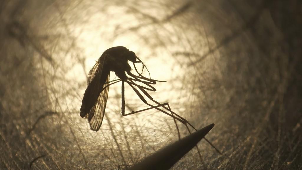 FILE - In this Aug. 26, 2019, file photo, Salt Lake City Mosquito Abatement District biologist Nadja Reissen examines a mosquito in Salt Lake City. Ea...