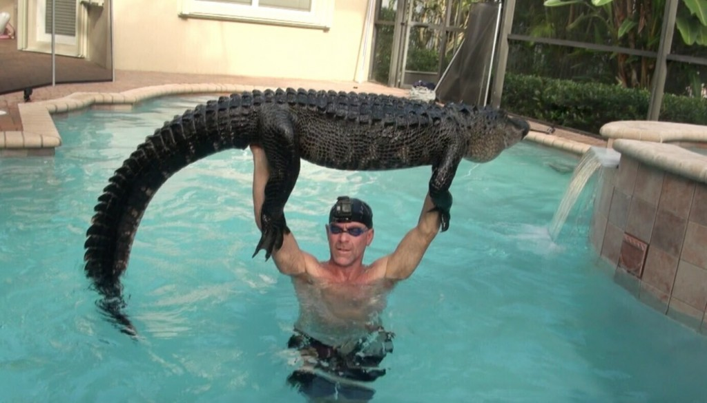 In this Wednesday, Oct. 15, 2019  photo provided by Paul Bedard,  Bedard raises a 9-foot alligator over his head at a home in Parkland, Fla. Bedard, a...