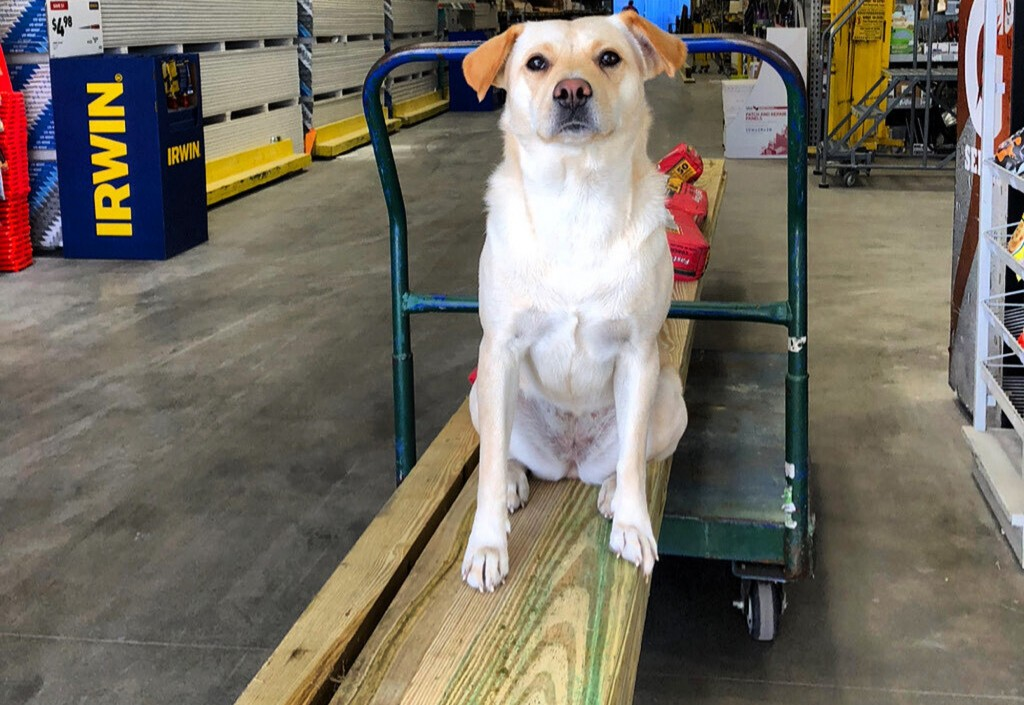 This undated photo provided by Ben Brengle shows his dog Bella. Brengle, of South Carolina, is offering $10,000 for the safe return of his dog after s...