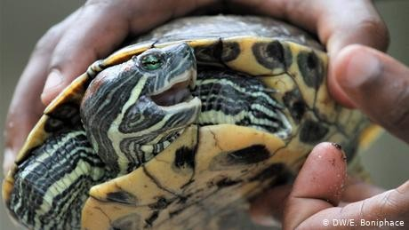 Malaysian officials find 5,255 turtles packed in suitcases