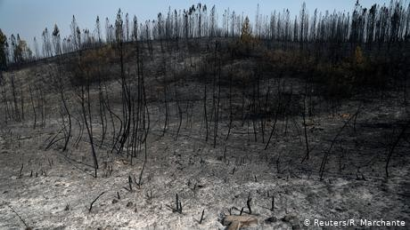 Portugal: Wildfires continue to rage as winds fan the flames