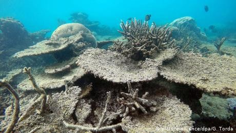 Marine heatwaves more devastating to coral reefs than previously thought: Australian research - Xinhua | English.news.cn