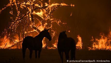 Australian bushfires forecasted to reach Sydney suburbs