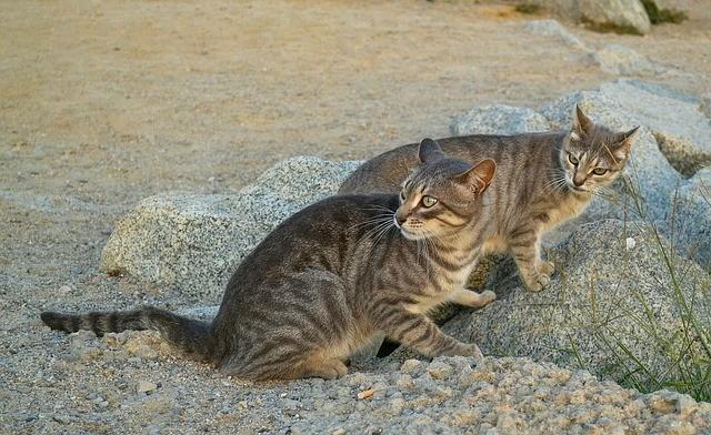 流浪貓(照片來源:Pixabay提供)