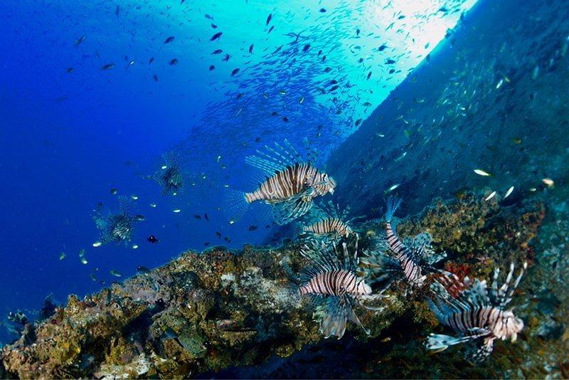Marine life (Photo/Taipei City Animal Protection Office)