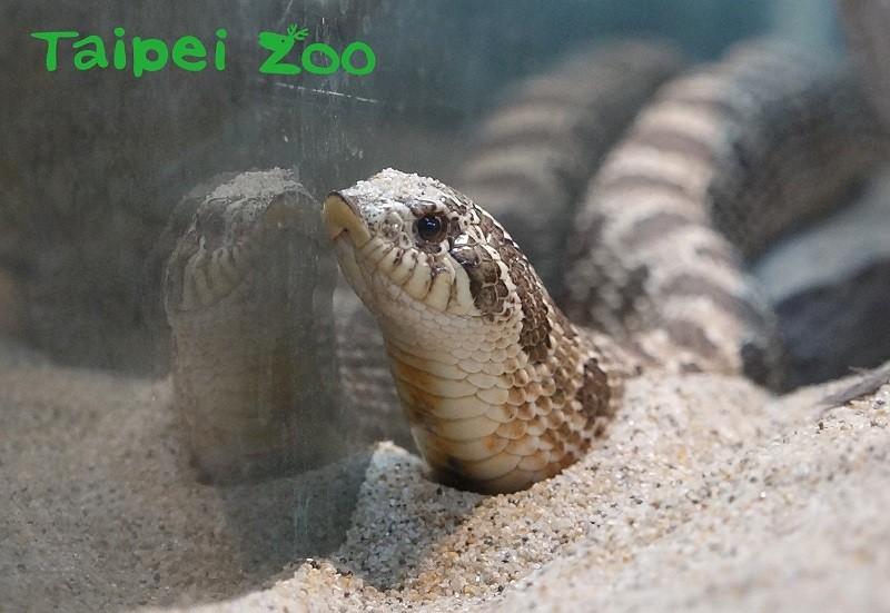 (Taipei Zoo photo)