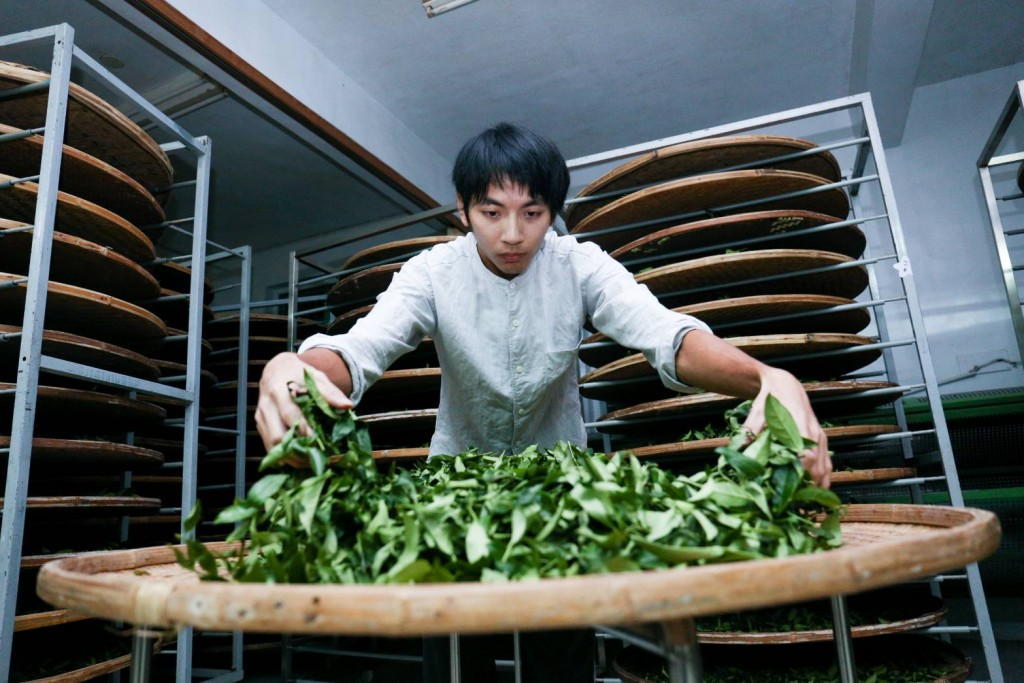 108年奪得全國製茶技術競賽冠軍的坪林青農翁治源(圖片提供:新北市農業局)