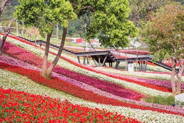 Park in Taipei recreates visual sensation of Kamifurano flower fields