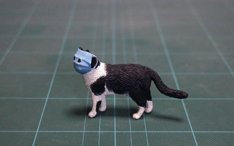 Masked cat model (Twitter, meetissai photo)