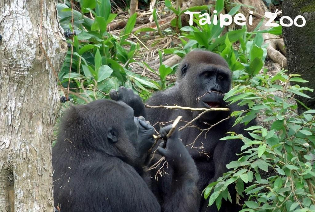 照片來源:台北市立動物園