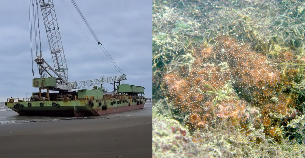 Evidence shows massive killing of coral species by CPC's work vessel (TEIA's Flickr photo)