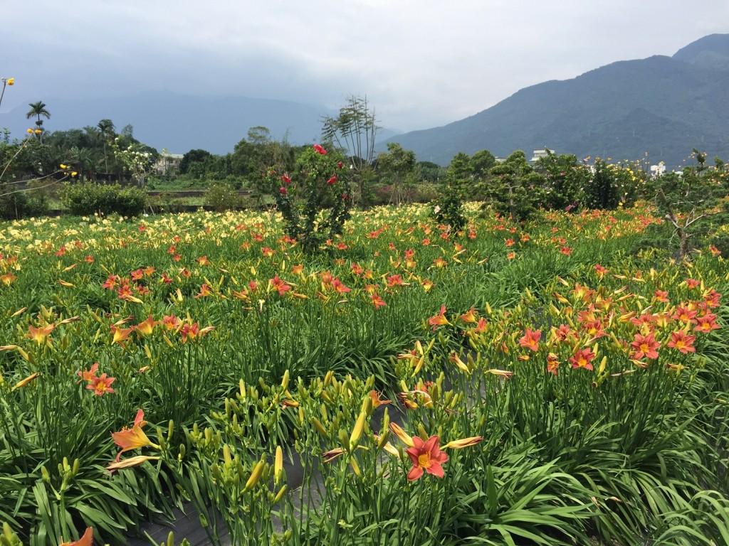 照片來源:行政院農業委員會花蓮區農業改良場