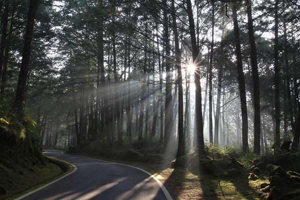 阿里山祝山林道。(照片由林務局提供)